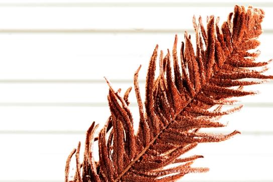 Farnblatt nach einem Winter im Freien
